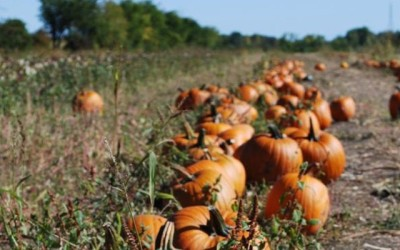 Shlagel Family Farms – October Chapter Meeting